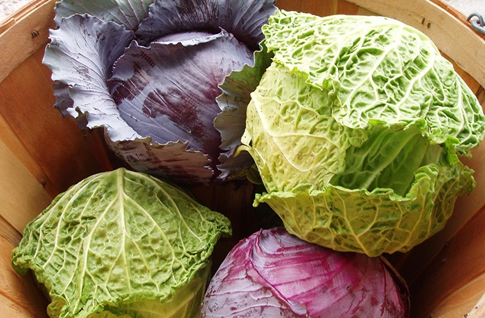 bắp cải chứa nhiều vitamin quan trọng cho da bị mụn