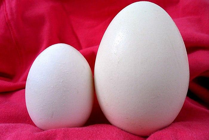 bà bầu có nên ăn trứng ngỗng