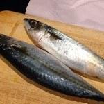 Cá thu tươi nguyên con