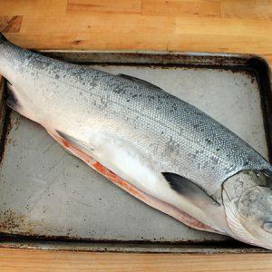 Cá Hồi Nhật Nguyên Con Đông IQF