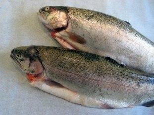 Cá Hồi Chile Nguyên Con Đông IQF