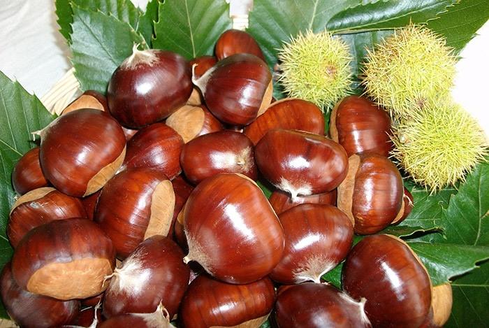 Các loại hạt tốt cho sức khỏe