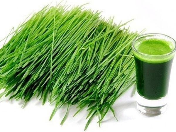 Bột lúa mạch Grass Barley Nhật Bản