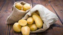 làm đẹp từ khoai tây