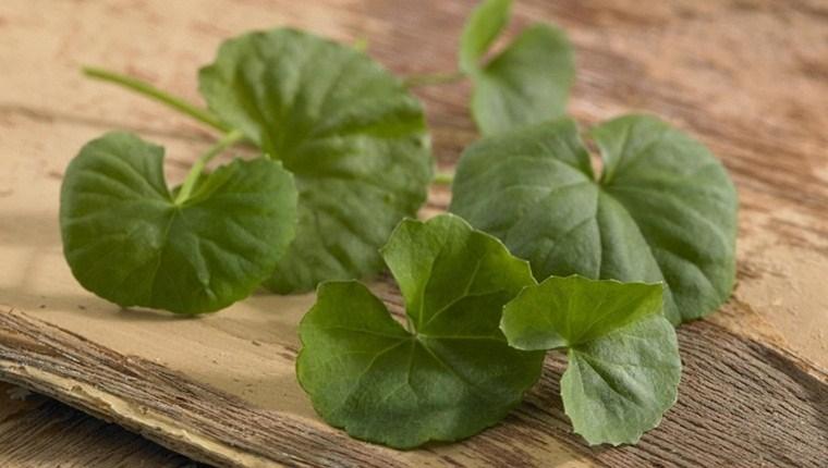 Khám phá 9 lợi ích của rau má đối với sức khỏe và làm đẹp