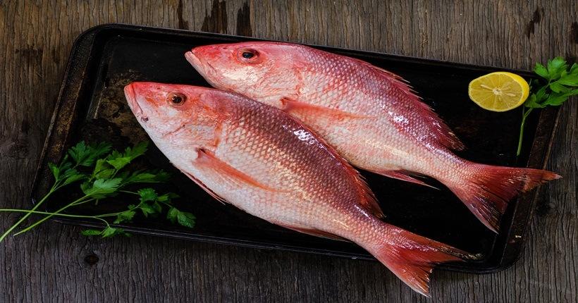 Cá  giàu axít omega – 3, tốt cho tim mạch