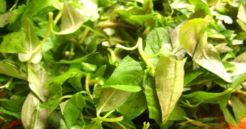 Rau răm – loại rau tuyệt đối không được ăn khi mang thai