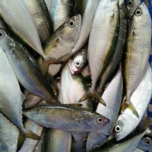 Cá Bạc Má Tươi